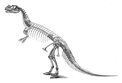 Incorrect Ceratosaurus reconstruction by Othniel C. Marsh, 1896 - Note: upright posture and pronated hands